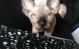 Shio met z'n mooie ogen