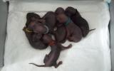 Kittens050131520081751475030_1.JPG