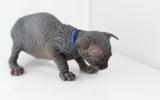 Kittens06222262008910516553.JPG