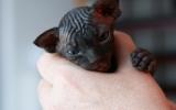 Kittens06222262008915526571.JPG