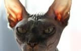 Kittens06222262008919426585.JPG