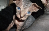Kittens062525620081013075027kopie.JPG