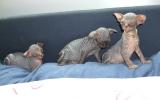Kittens062525620081027255039.JPG