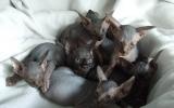 Kittens07088720081108295033.JPG
