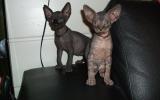 Kittens07138720082226175005.JPG