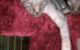 Kittens071816720081058535005.JPG