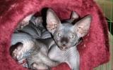 Kittens071818720081316505035.JPG