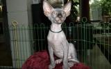 Kittens071818720081317575036.JPG