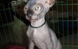 Kittens071818720081319075040.JPG