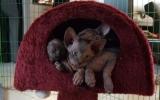 Kittens071818720081721175041.JPG