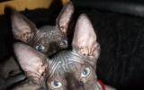 Kittens071818720082021025047.JPG