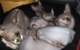 Kittens071818720082022165052.JPG