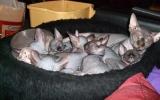 Kittens071918720082123195004.JPG