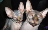 Kittens071918720082129415016.JPG