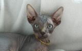 Kittens071919720081333065033.JPG