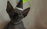 Kittens071919720081456385057.JPG