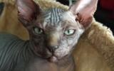 Kittens072827720081454526837.JPG