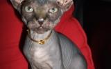 Kittens072827720081526216846.JPG