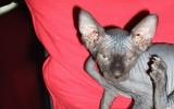 Kittens072827720081527156848.JPG