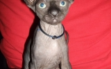 Kittens072827720081529196856.JPG