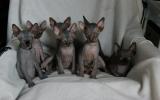 Kittens0731samen31720081553077009.JPG