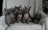 Kittens0731samen31720081553087010.JPG