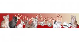 Kitten Gezocht